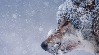 animal-carnivorous-cold-326097 (1)